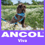 ANCOL Lead, Collars and Harness