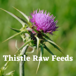 Thistle Raw Feeds